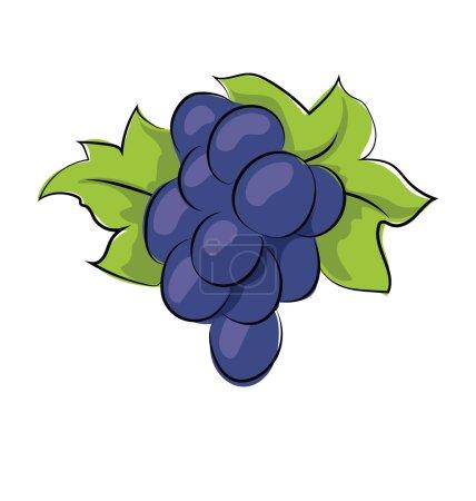 Grapes Hand Drawn Vector Icon