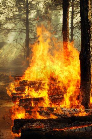 Burning trees in forest fires