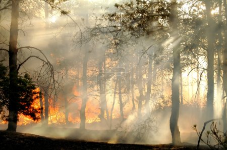 The smoke through the trees in forest fires