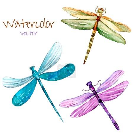 Illustration pour Ensemble aquarelle libellule. Insectes d'art isolés vectoriels dans le vecteur . - image libre de droit