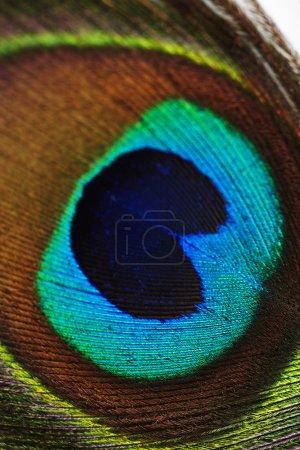 Photo pour Gros plan de plumes de paon vibrantes - image libre de droit