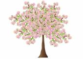 Spreading flowering tree