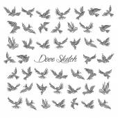 Pigeons and doves birds symbols for peace or wedding concept design