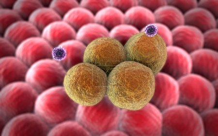 Macrophage, cancer cell