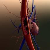 Artery, heart