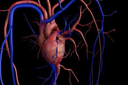 Photo pour Modèle de coeur, coeur, modèle de coeur humain, chemin de coupure complet inclus, coeur humain pour l'étude médicale, anatomie de coeur humain - image libre de droit