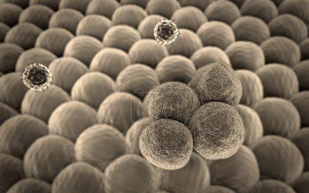 T-lymphocytes, cancer cell