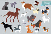 Different Breeds Of Dog Vector Collection