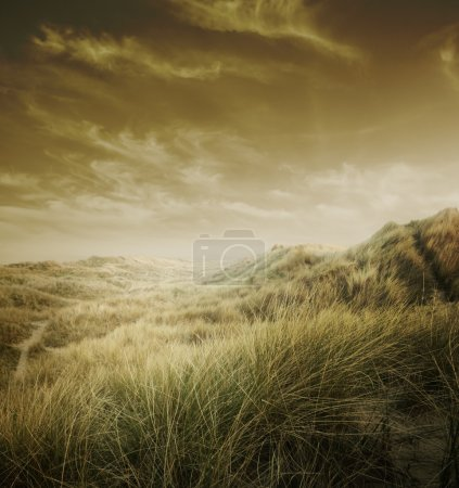 Photo for Golden landscape of sandunes and sky at sunset. - Royalty Free Image