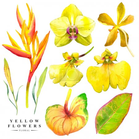 Botanical illustration with realistic tropical flowers and leaves.