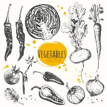 Sketch of mediterranean vegetable.