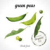Watercolor young peas Provencal style Recent watercolor paintings of organic food Veggie menu