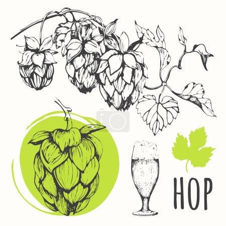 Hops set. Sketch design. Beer set.