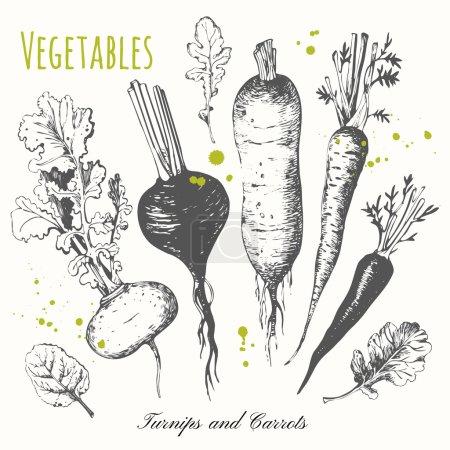 Illustration pour Croquis en noir et blanc. Illustration vectorielle avec croquis légume. Navets, carottes et radis . - image libre de droit