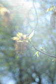 Abstract blurred nature background with twig