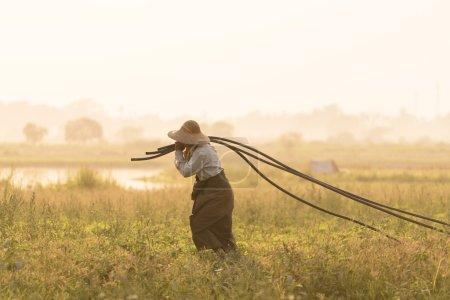 Asian, Farmer on farm Sunset time