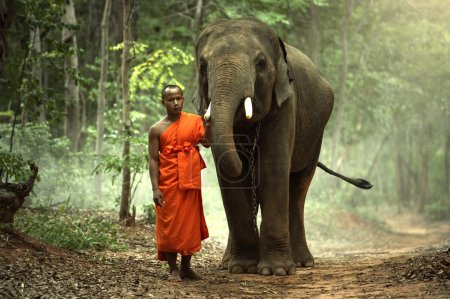 The monk with elephant in forest