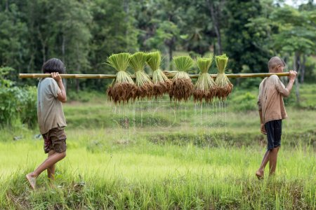 Thai, Little boy and girl farmer on green fields are bearing the