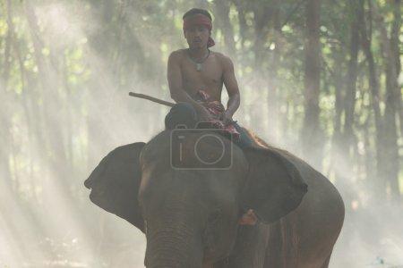 Mahout on elephant back