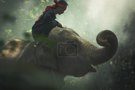 Elephant with mahout in wildlife
