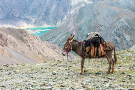 Cargo donkey in mountain area