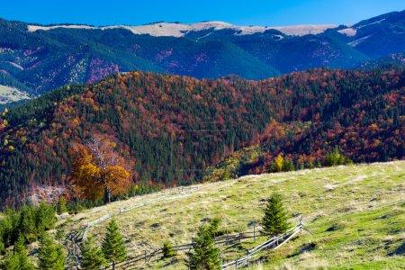 Photo pour Perspective de montagne automnale à trois couches avec prairie herbeuse Forêt colorée et hautes collines et ciel bleu - image libre de droit