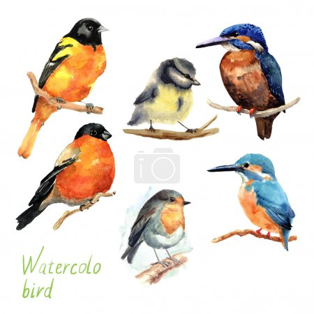 Photo for Hand drawn watercolor birds. Brightly tropical set. - Royalty Free Image