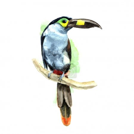 Photo for Hand painted toucan, bird. Watercolor illustration. - Royalty Free Image