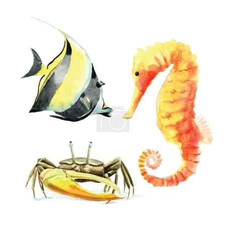 Hand drawn watercolor sea creatures