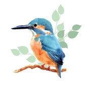 Hand drawn watercolor bird