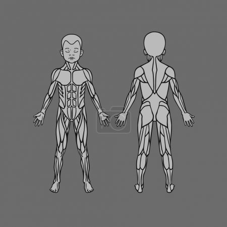 Anatomy of children muscular system, exercise and muscle guide. Child muscle vector art, front and back view.