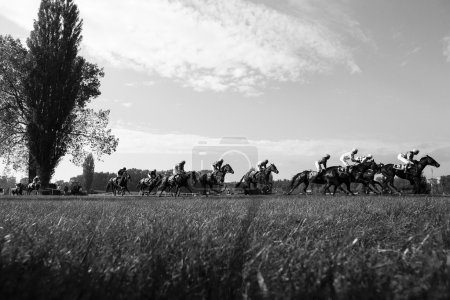 Horse racing Black&White