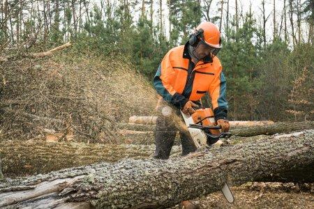 Photo pour Travailleur forestier avec scie à chaîne est scier un journal. Échantillon de travaux sur la journalisation de la forêt - image libre de droit