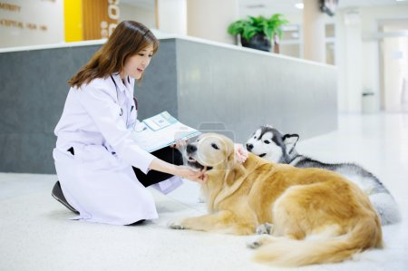 Young veterinarian with the cute dog