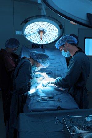 ein Tierarzt, der in einem kleinen Operationssaal mit einem Assistenten arbeitet
