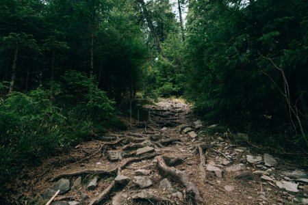 Road trek into the mountains