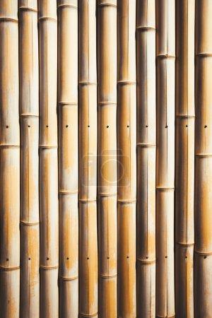 Photo pour Arrière-plan avec de belles branches de bambou lisse jaune - image libre de droit