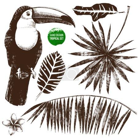 Photo pour Ensemble tropical dessiné à la main sur fond blanc - image libre de droit