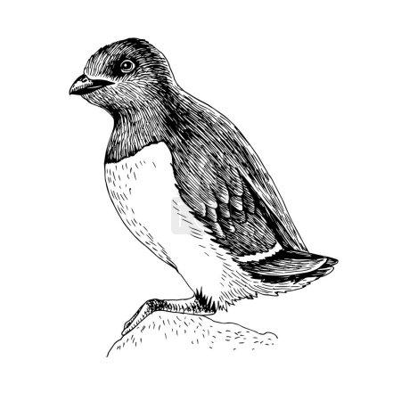 Illustration pour Collection d'animaux arctiques dessinés à la main. Dovekie mignon, oiseau polaire noir isolé sur fond blanc. Habitan au Groenland, Novaya Zemlya et Svalbard. Illustration vectorielle - image libre de droit