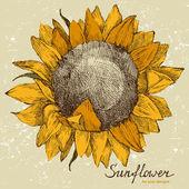 Hand gezeichneten Sonnenblume