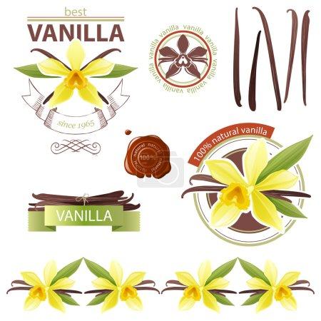 Illustration pour Eléments de design avec des fleurs de vanille - image libre de droit