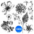 Collection of 7  highly detailed hand drawn flower...