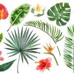 Large hand drawn watercolor tropical plants set...