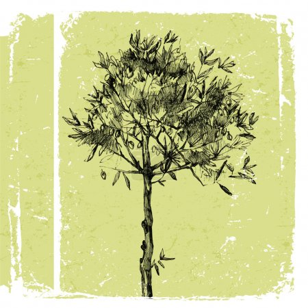 hand drawn olive tree