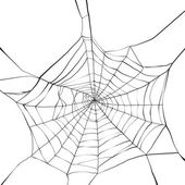 Black spider web on white background