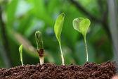 Růst nový život rostlin