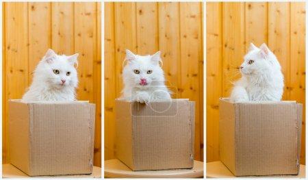 Cute white cat in a cardboard box. Wooden backgrou...