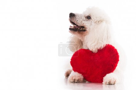A lover valentine puppy dog with a red heart isola...