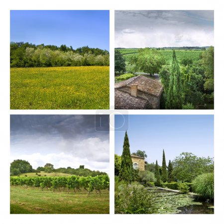 Vineyards and countryside