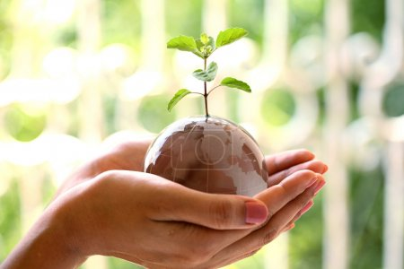 Photo for Glass globe and plant in the hands -Green world - Royalty Free Image